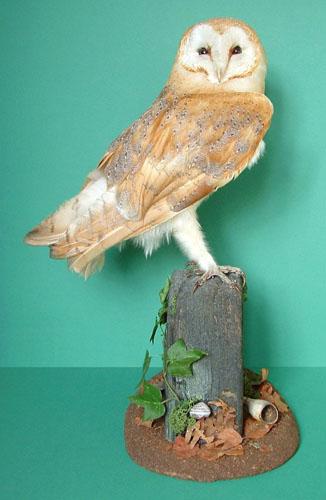 Beaks & Feet – Fur & Feathers