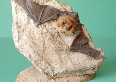 Pipistralle Bat