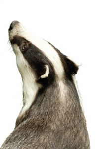 badgerhead (1)
