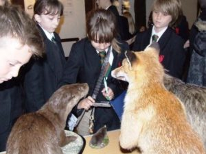 Animals & Adaptations workshop